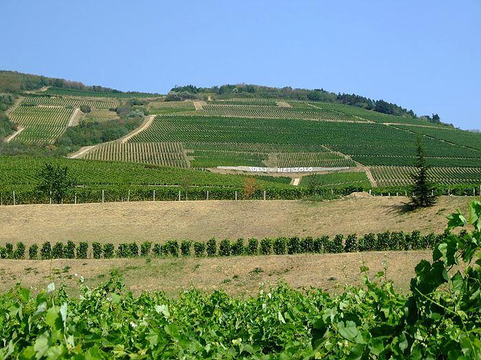 [사진 7] 토카이 와인산지