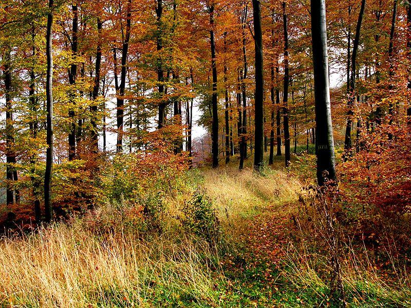 오늘날의 토이토부르거 숲 / 출처 : wikipedia