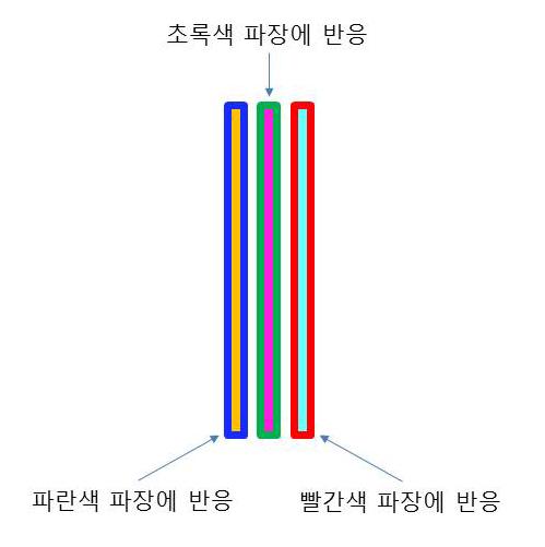 그림 4. 컬러필름의 구조